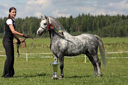 Myydään Hevosia Halvalla